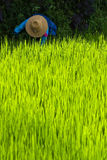 Old woman with straw hat in rice paddy Stock Photo