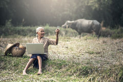 Old woman using a laptop Stock Image