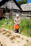 Old woman watering the beds in the garden Stock Image