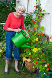Old Woman Watering Flower Plants at the Garden. Royalty Free Stock Image
