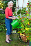 Old Woman Watering Plants at the Garden Stock Image