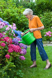 Old Woman Watering Pretty Flowers at the Garden Royalty Free Stock Images