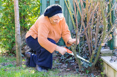 Old woman working in garden Royalty Free Stock Photos
