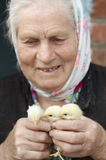 Old woman with yellow chickens. Old woman with 3 cute yellow chickens Royalty Free Stock Images