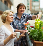 Old women on balcony with coffee Royalty Free Stock Photos