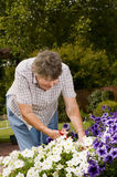 Old women gardening Stock Images
