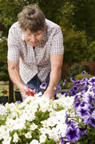 Old woman gardening Stock Photo