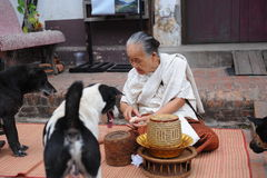 Old women give food to dogs Royalty Free Stock Photos