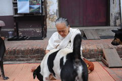 Old women give food to dogs Stock Photo