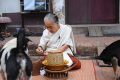 Old women give food to dogs Stock Photography