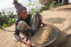Old women working in a farm Nepal Stock Photos