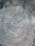 Old wood. Texture of old wooden rounds Royalty Free Stock Images
