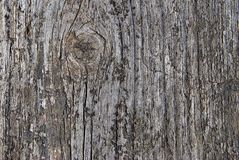 Old wood. Old grey wood board detail Stock Photography