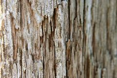 Old wood. Detail view of very old cracked wood Royalty Free Stock Photography