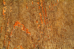 Old wood. Photo of a surface of old wood Stock Images