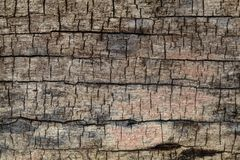 Old wood. As background or texture stock image