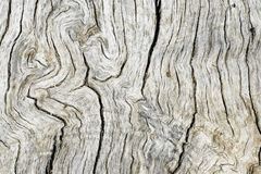 Old wood ash Stock Photography