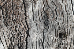 Old wood ash Royalty Free Stock Photography