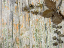Old wood with autumnal decoration to use as background Stock Photos