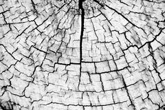 Old wood background, black and white timber cut Royalty Free Stock Photo