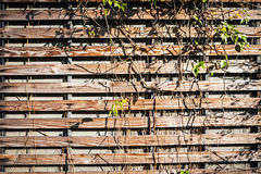 Old wood background drop shadow. Soft light stock photo