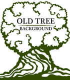 Old wood background. Image of a large trunk and a dense crown of an old tree. Stock Photography