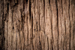 Old wood background. Old wooden plank Royalty Free Stock Image