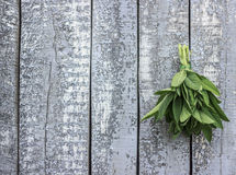 Old Wood background with sage bouquet on one  side Royalty Free Stock Images