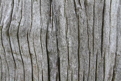 Old Wood background. Old wood texture for background Royalty Free Stock Photo