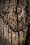Old wood background. Used for text and image Royalty Free Stock Photography
