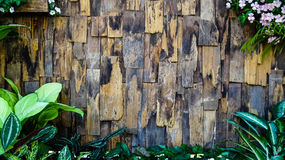 Old wood background vertical. Old wood background vertical,Thailand Stock Photography