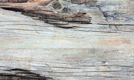 Old wood backround. Very old wood backround, grey Stock Image