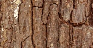 Old Wood bark surface Stock Photos