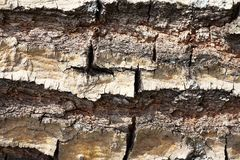 Old Wood Bark Tree Texture Background Pattern Royalty Free Stock Images