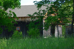 Old wood barn partially hidden behind green trees. Early sunny summer Stock Image
