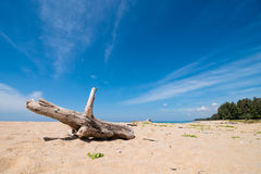 Old wood on the beach in sunny day Royalty Free Stock Images