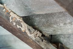 Wood beams with termites royalty free stock image