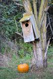 Old wood birdhouse with a Pumpkin in the forest Royalty Free Stock Photography