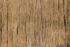 Old wood with black mold. Royalty Free Stock Photo