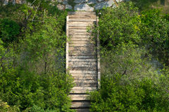 Old wood bridge among nature on top view. Nature background Stock Image