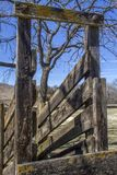 Old wood cattle chute stock images