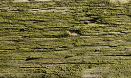 old wood covered with green moss Royalty Free Stock Photo