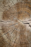 Old Wood Cracked Rings Royalty Free Stock Photos