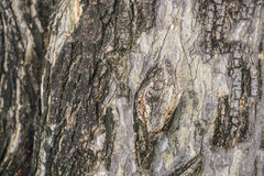 Old wood cracked texture Stock Image