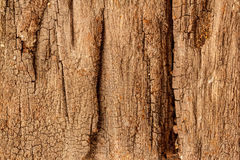 Old wood with cracks pattern Royalty Free Stock Photo