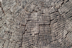 Old wood cut texture Stock Photo
