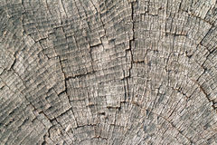 Old wood cut texture Stock Photos