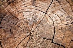 Old wood cut texture Stock Photos