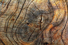 Old wood cut texture background Stock Photography