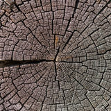 Old wood cut texture Royalty Free Stock Image